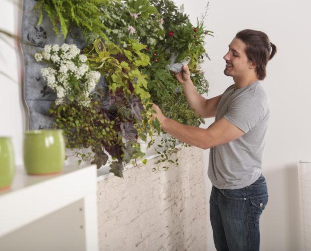 Mann hält Gartengeräte für die Teilnahme an Blumen in seinem vertikalen Garten an der Wand. Glückliches modernes und gesundes Leben.