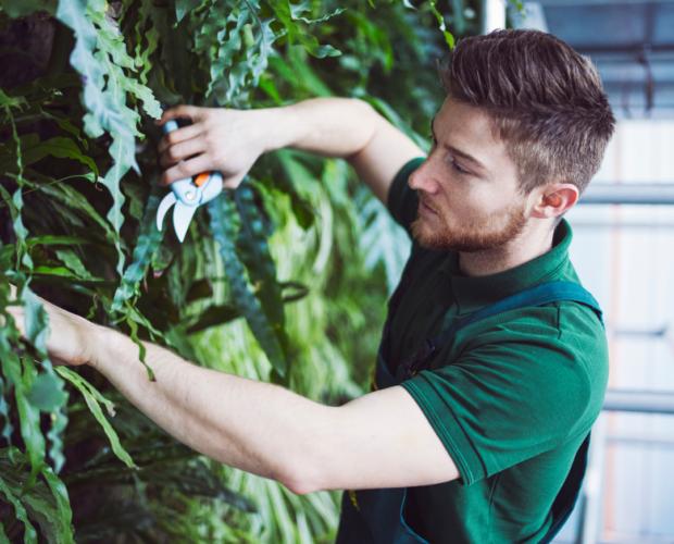 Mann kümmert sich um vertikalen Garten.